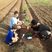 Abba's House garden planting